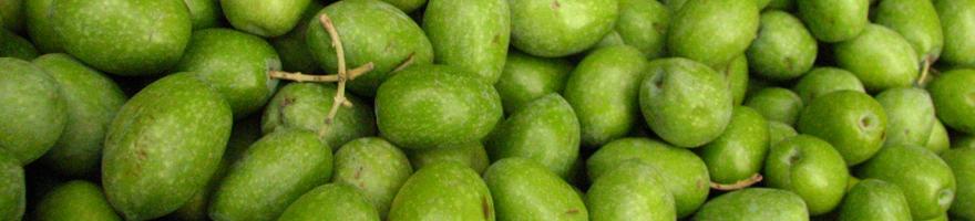 cerignola-olives-880
