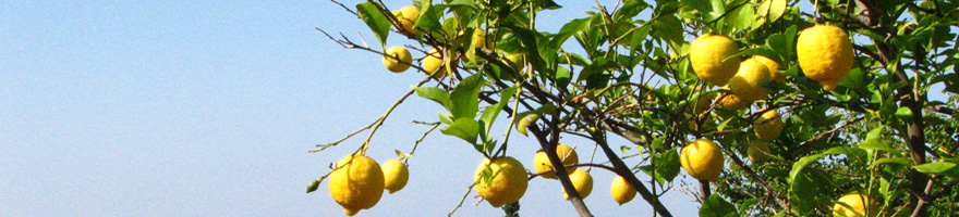 lemon-tree-elba-880